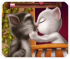 Mèo tôm hôn angela